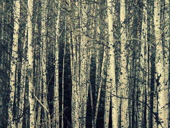 robin-dickinson-birch-dream