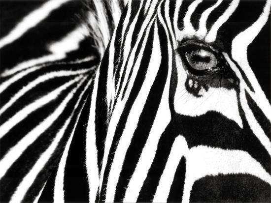 rocco-sette-black-white-ii-zebra