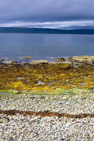 rocky-beach-with-pebbles-and-seaweed
