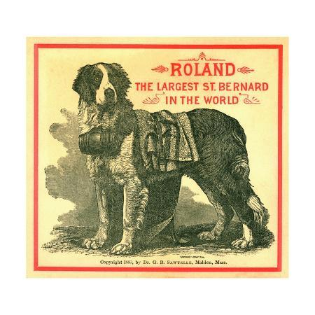 roland-the-largest-st-bernard-in-the-world-trade-card