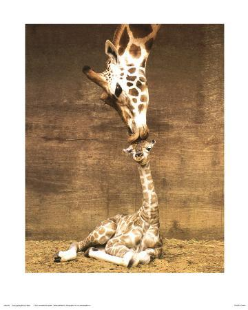 ron-d-raine-giraffe-first-kiss