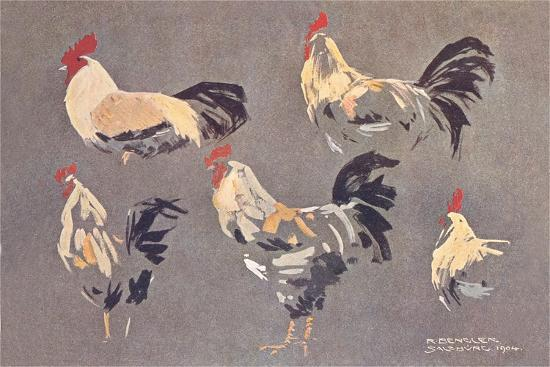 roosters-and-hens