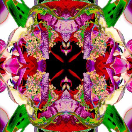 rose-anne-colavito-neon-rose-redux