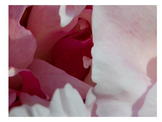 rose-anne-colavito-peony-diptych