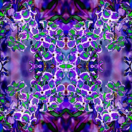 rose-anne-colavito-violet-stars-3