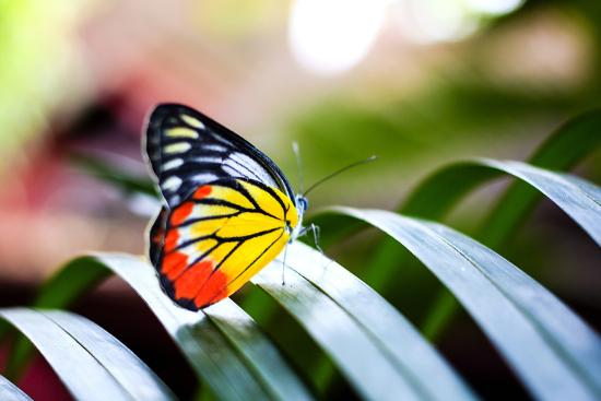 rrrainbow-colorful-butterfly-resting-on-the-palm-tree-leaf-in-thailand