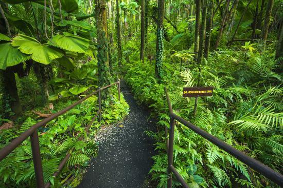 russ-bishop-jungle-trail-at-hawaii-tropical-botanical-garden-hamakua-coast-the-big-island-hawaii-usa