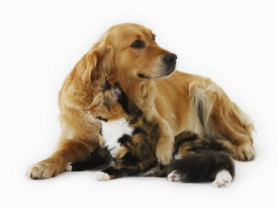 russell-glenister-cat-and-golden-retriever