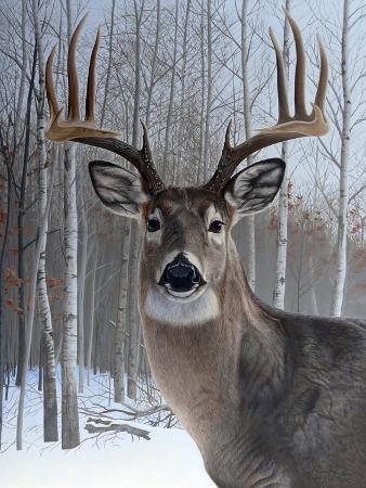 rusty-frentner-deer