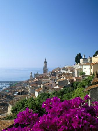 ruth-tomlinson-bougainvillea-in-flower-menton-alpes-maritimtes-cote-d-azur-provence-french-riviera-france