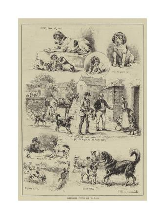 s-t-dadd-cottesmore-puppies-put-to-walk