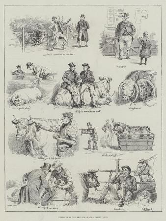 s-t-dadd-sketches-at-the-smithfield-club-cattle-show