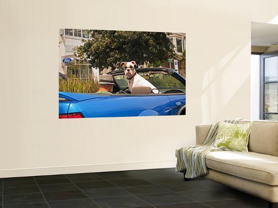 sabrina-dalbesio-dog-wearing-goggles-passenger-of-convertible-car-on-vanness-avenue