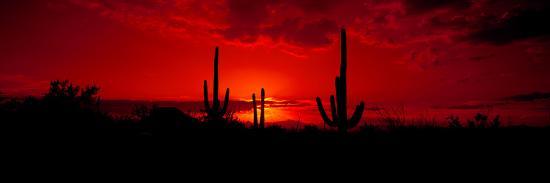 saguaro-cactus-carnegiea-gigantea-in-a-desert-at-dusk-arizona-usa