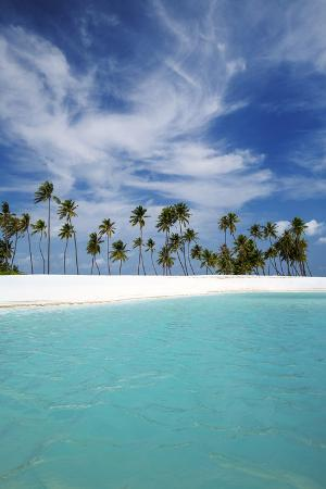 sakis-papadopoulos-palm-trees-and-tropical-beach-maldives-indian-ocean-asia