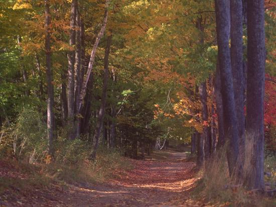 sally-brown-autumn-trees-in-vermont