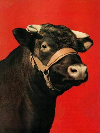 salvadore-pinto-black-bull-february-1-1944