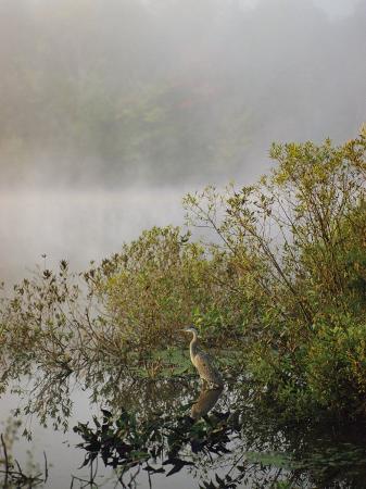 sam-abell-great-blue-heron-waits-for-breakfast-near-the-appalachian-trail-lake-hebron-maine