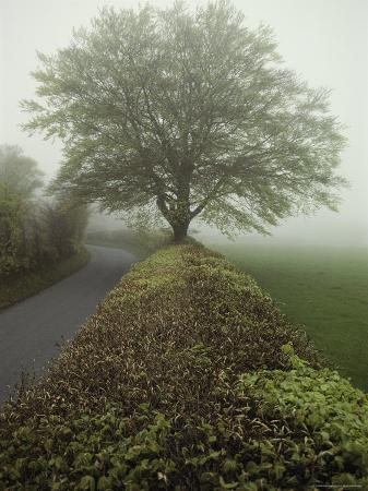 sam-abell-hedge-lined-country-road-in-somerset-england