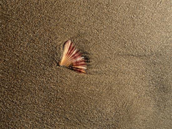 sam-abell-shell-on-sand-at-bermagui-beach