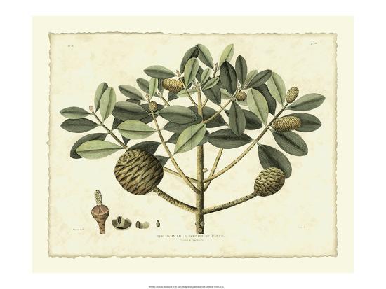 samuel-curtis-delicate-botanical-iv