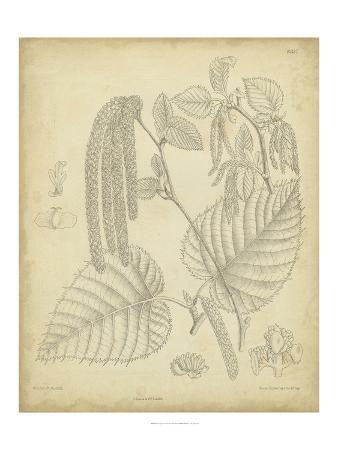 samuel-curtis-vintage-curtis-botanical-ii
