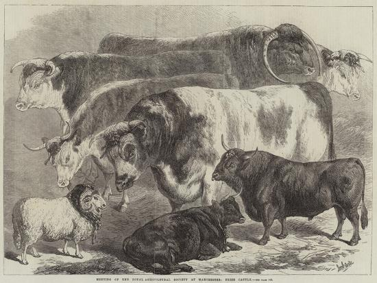 samuel-john-carter-meeting-of-the-royal-agricultural-society-at-manchester-prize-cattle