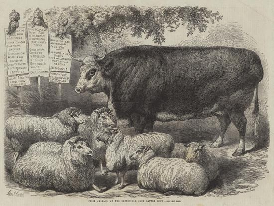 samuel-john-carter-prize-animals-at-the-smithfield-club-cattle-show