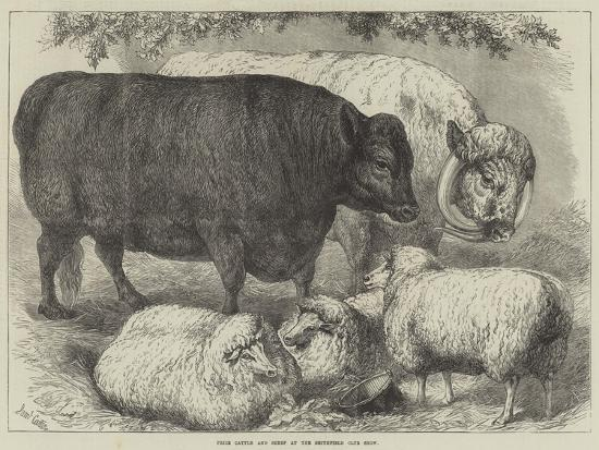 samuel-john-carter-prize-cattle-and-sheep-at-the-smithfield-club-show