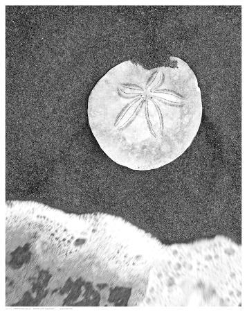 sand-dollar-and-surf
