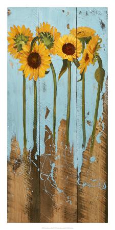 sandra-iafrate-sunflowers-on-wood-ii