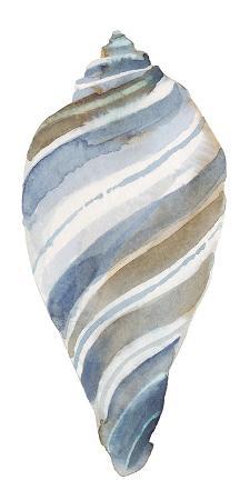 sandra-jacobs-coastal-seashells-tulip