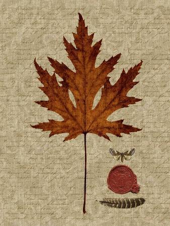 sandy-lloyd-autumn-leaf-i