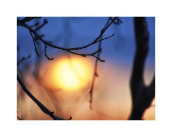 savanah-plank-abstract-sunset