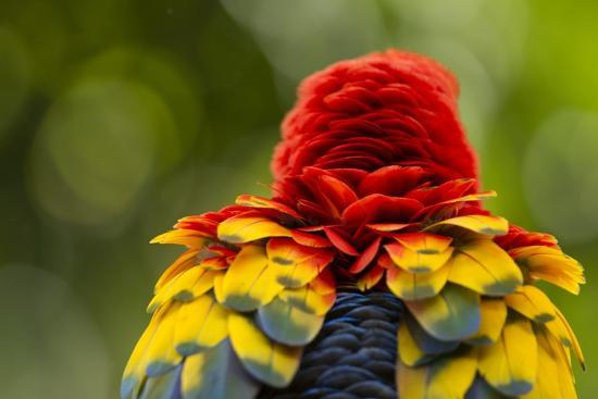 scarlet-macaw-costa-rica