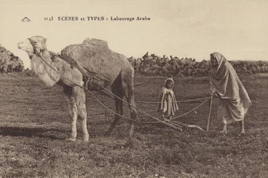 scenes-and-types-arabic-ploughing