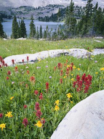 scott-t-smith-boulders-amid-wildflowers-ryder-lake-high-uintas-wilderness-wasatch-national-forest-utah-usa