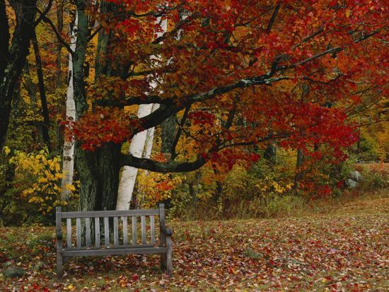 scott-t-smith-empty-bench-under-maple-tree-twin-ponds-farm-west-river-valley-vermont-usa