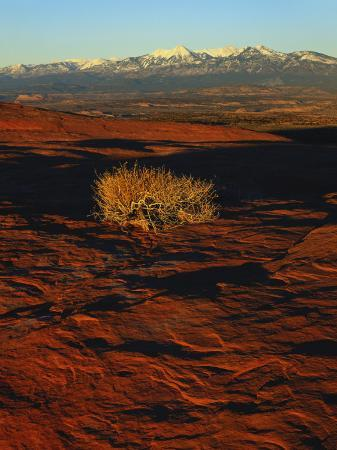 scott-t-smith-la-sal-mountains-in-background-canyon-rims-canyonlands-national-park-colorado-plateau-utah-usa