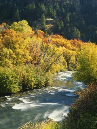 scott-t-smith-maples-and-birches-along-blacksmith-fork-river-wasatch-cache-national-forest-utah-usa