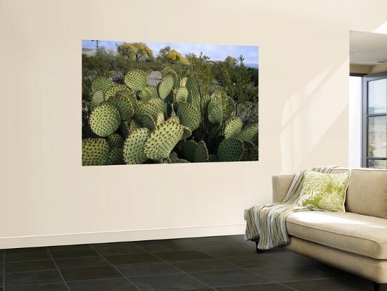 scott-t-smith-prickly-pear-cactus-near-willows-windmill-at-dugout-well-big-bend-national-park-texas-usa