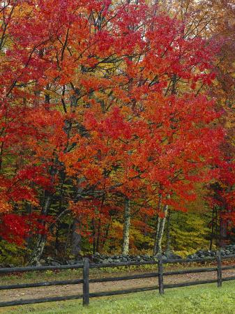 scott-t-smith-sugar-maple-in-autumn-twin-ponds-farm-west-river-valley-vermont-usa