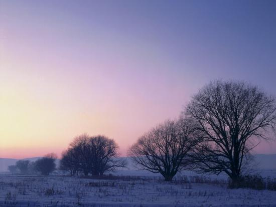 scott-t-smith-willow-trees-at-dusk-in-winter-cache-valley-great-basin-utah-usa