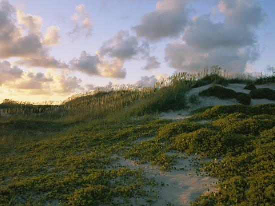 sea-oats-dunes-and-beach-at-oregon-inlet
