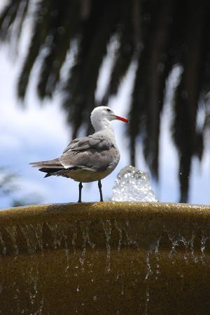 seagul-on-sausalito-fountain-marin-county-california