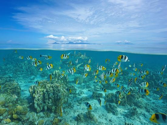 seaphotoart-above-and-below-sea-surface-with-raiatea-and-tahaa-islands
