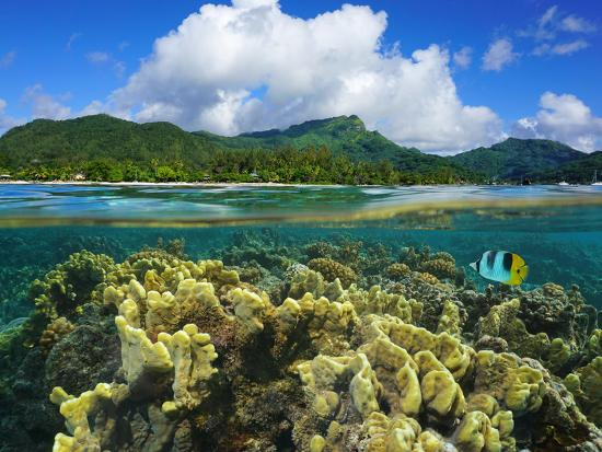 seaphotoart-split-over-and-under-water-surface-coast-of-huahine-island-french-polynesia