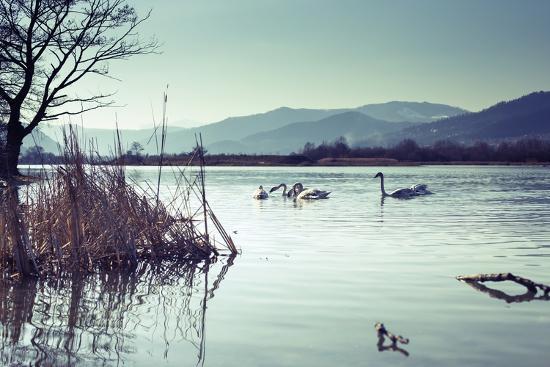 sebastian-radu-swans