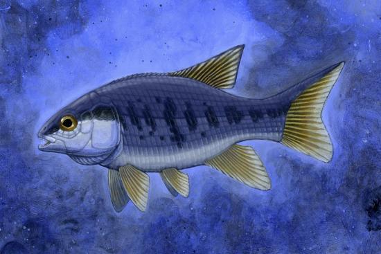 semionotus-flag-back-an-extinct-genus-of-ray-finned-fish