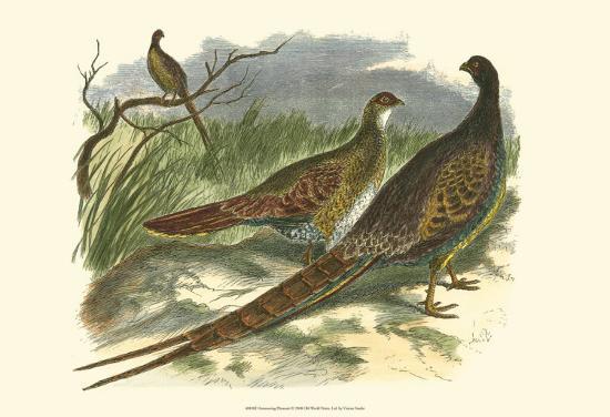 semmering-pheasant